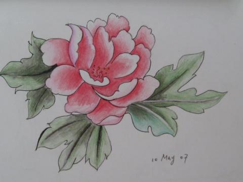 牡丹花精品铅笔画