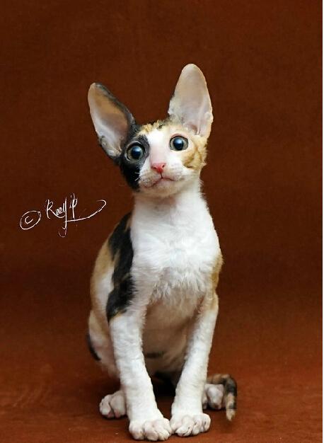 壁纸 动物 猫 猫咪 小猫 桌面 458_626 竖版 竖屏 手机